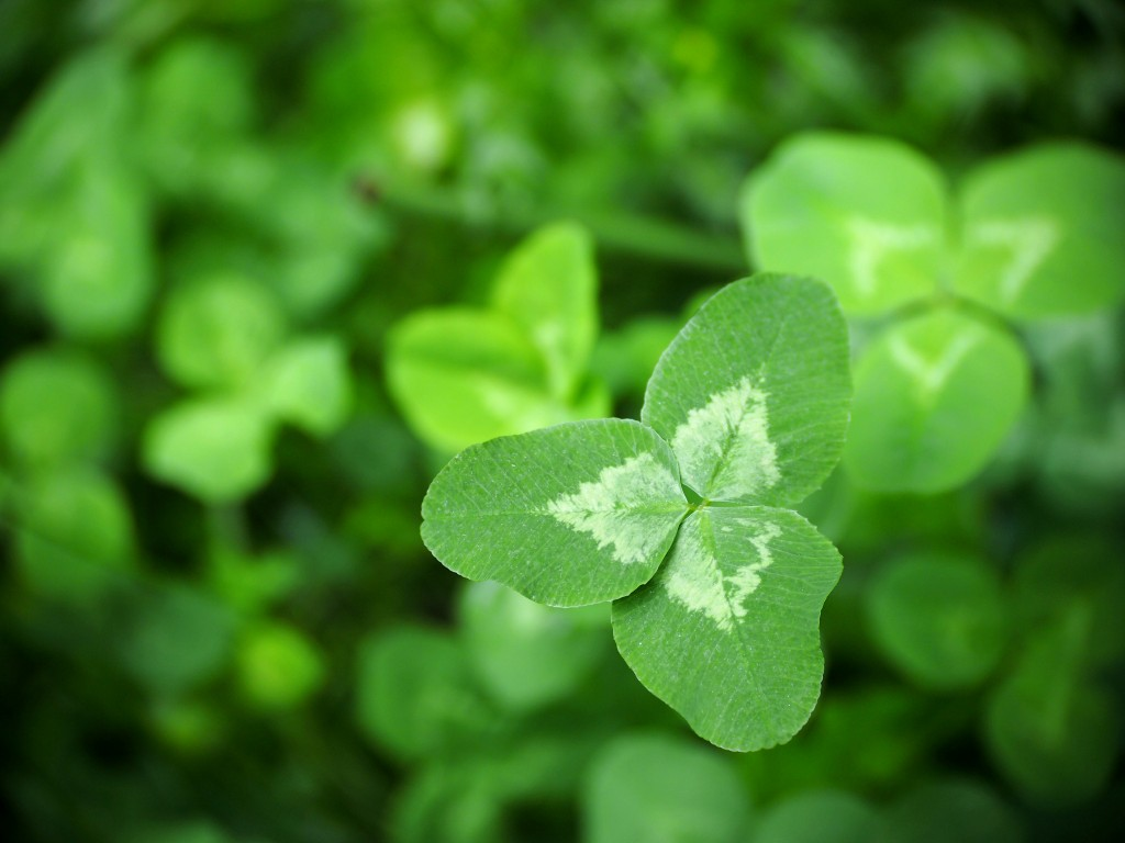 Rolling in Clover – Farmers friend or foe?