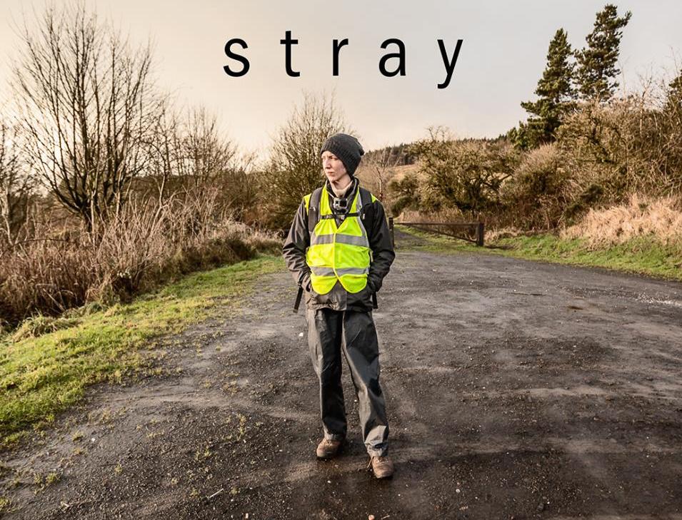 Grove Vets – Stray Campaign