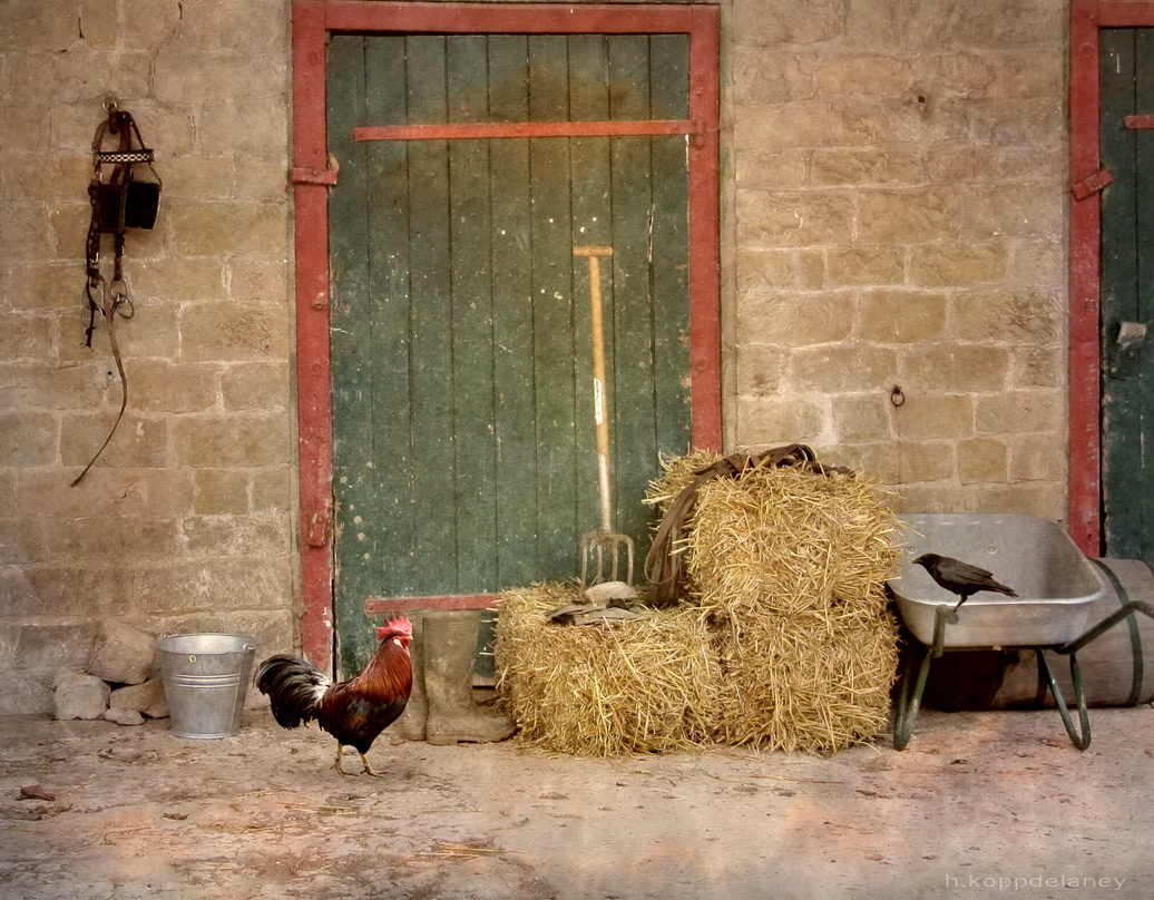 Support Farm Safety Week 2015 – don't learn safety by accident