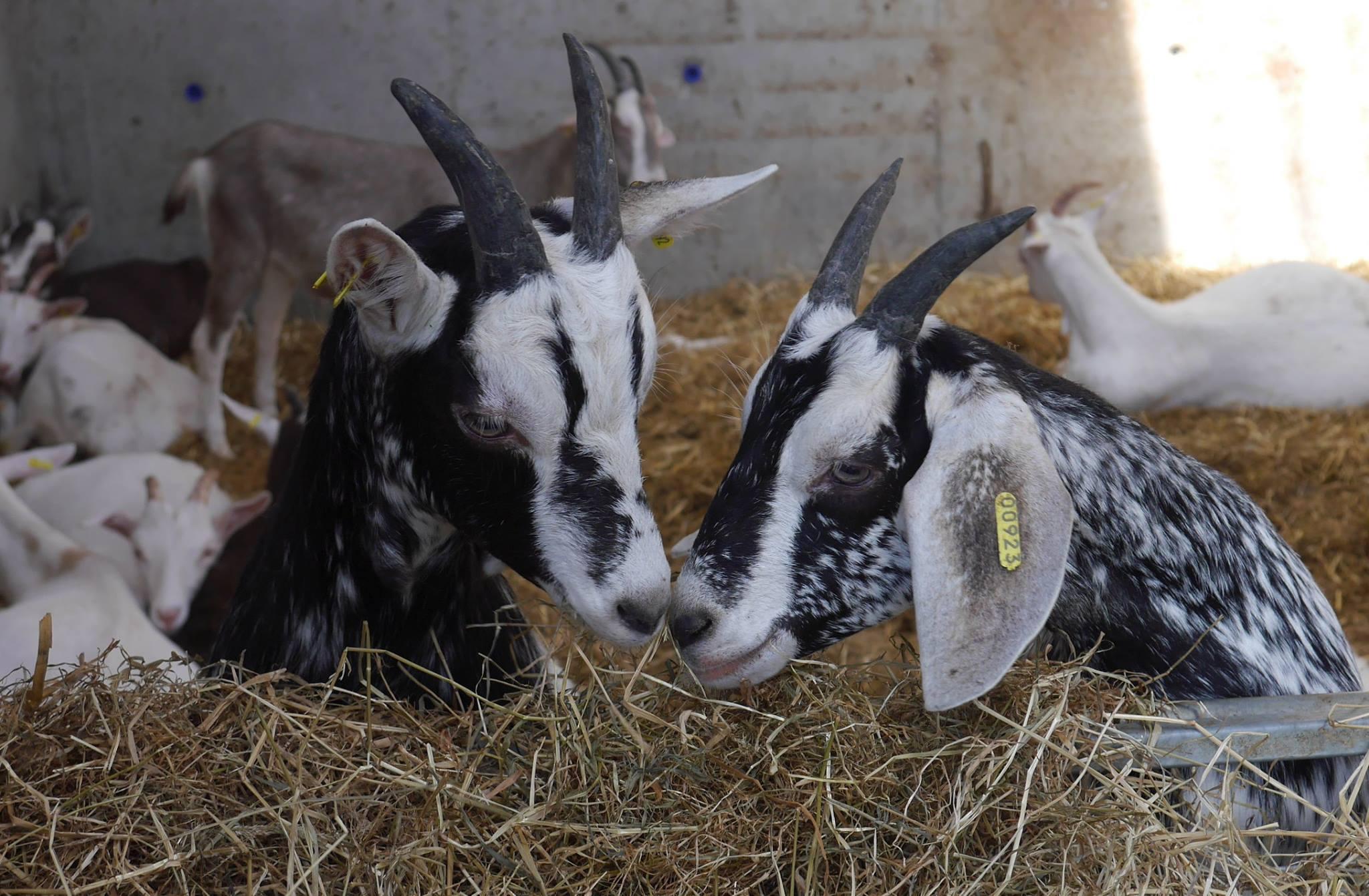 Donal Skehan visits Broughgammon Farm