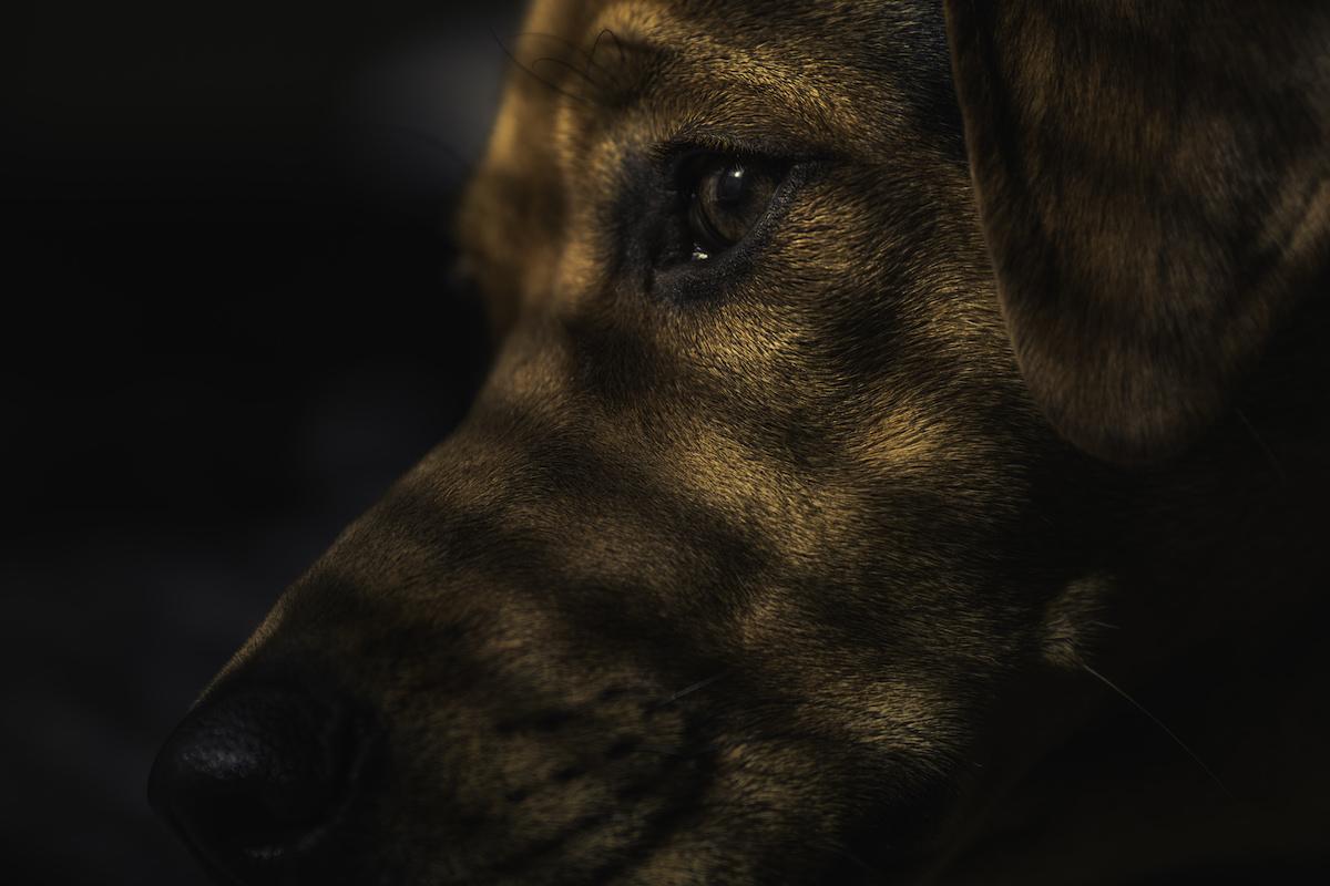 Dogs Trust Ballymena Foster Carers