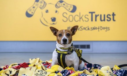 Tis the Season to Give Socks, Not Dogs