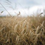 Farming Insurance – Ballymena