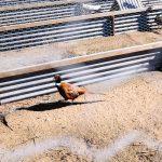 Animal Feeds – Killyless Stores Ballymena