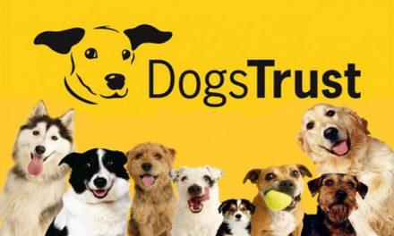 Dogs Trust Ballymena Fun Day 2017