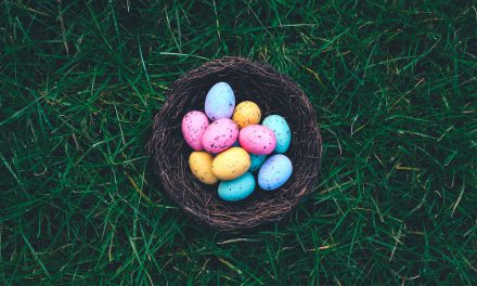 Grove Vets Ballymena – Don't share your Easter Egg with your dog