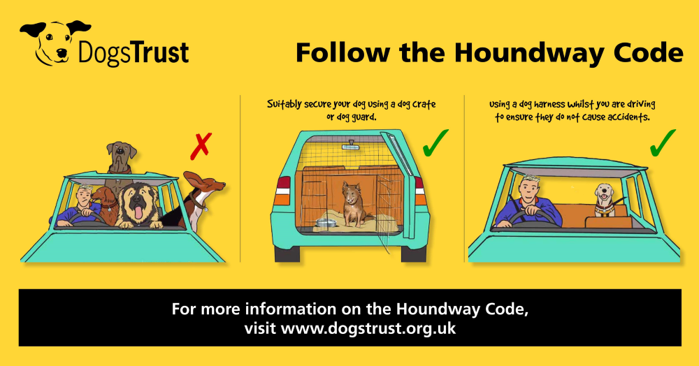 Dogs Trust Launches The Houndway Code Road Safety Campaign
