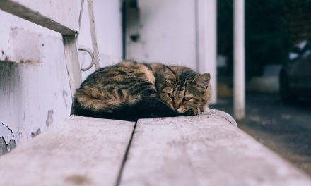 Dealing with the loss of a pet – Advice from Grove Vets Ballymena