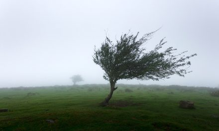 Hurricane Ophelia Help – Ballymena Today