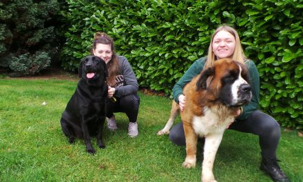 Twice The Love is Needed at Dogs Trust Ballymena