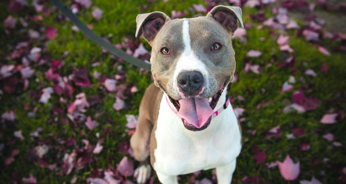 Protect your dog against Parvo Virus – Ballymena