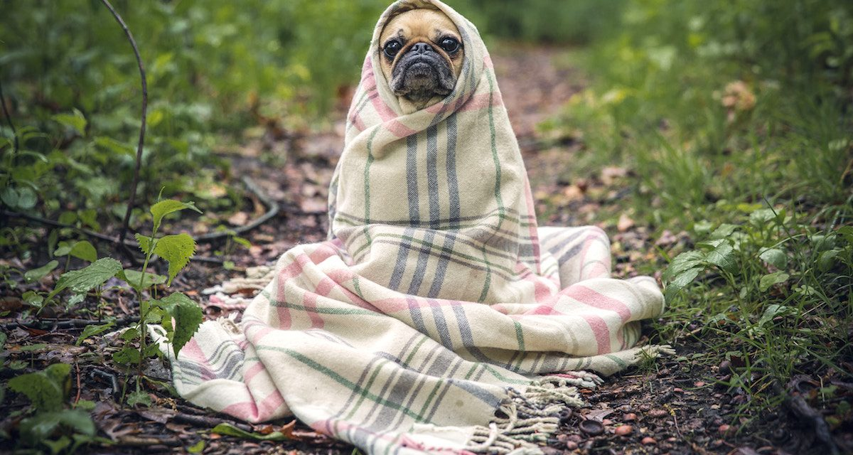 Kennel cough advice – Grove Vets Ballymena