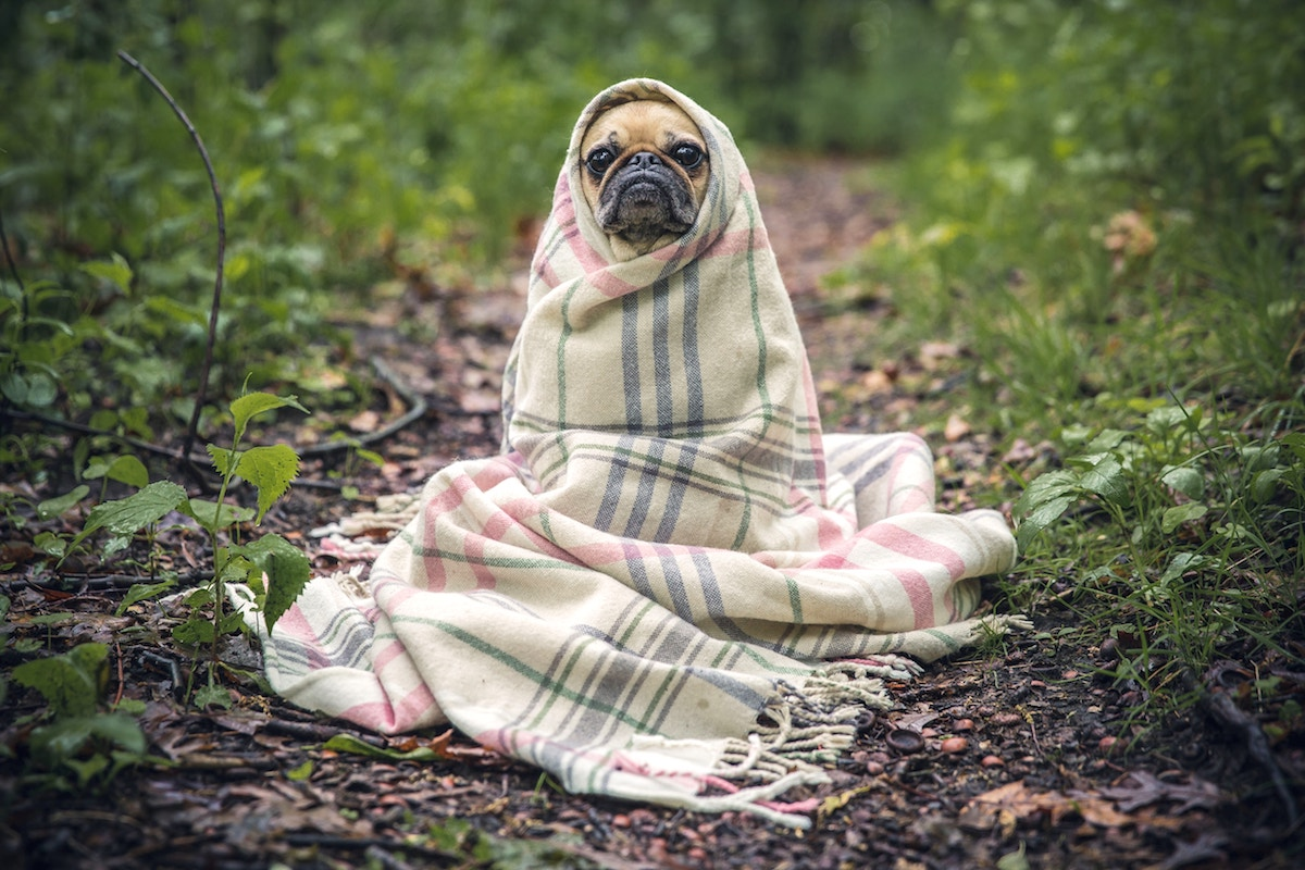 Kennel cough advice - Grove Vets Ballymena