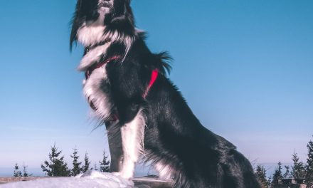 Protect your pet in freezing temperatures – Grove Vets Ballymena