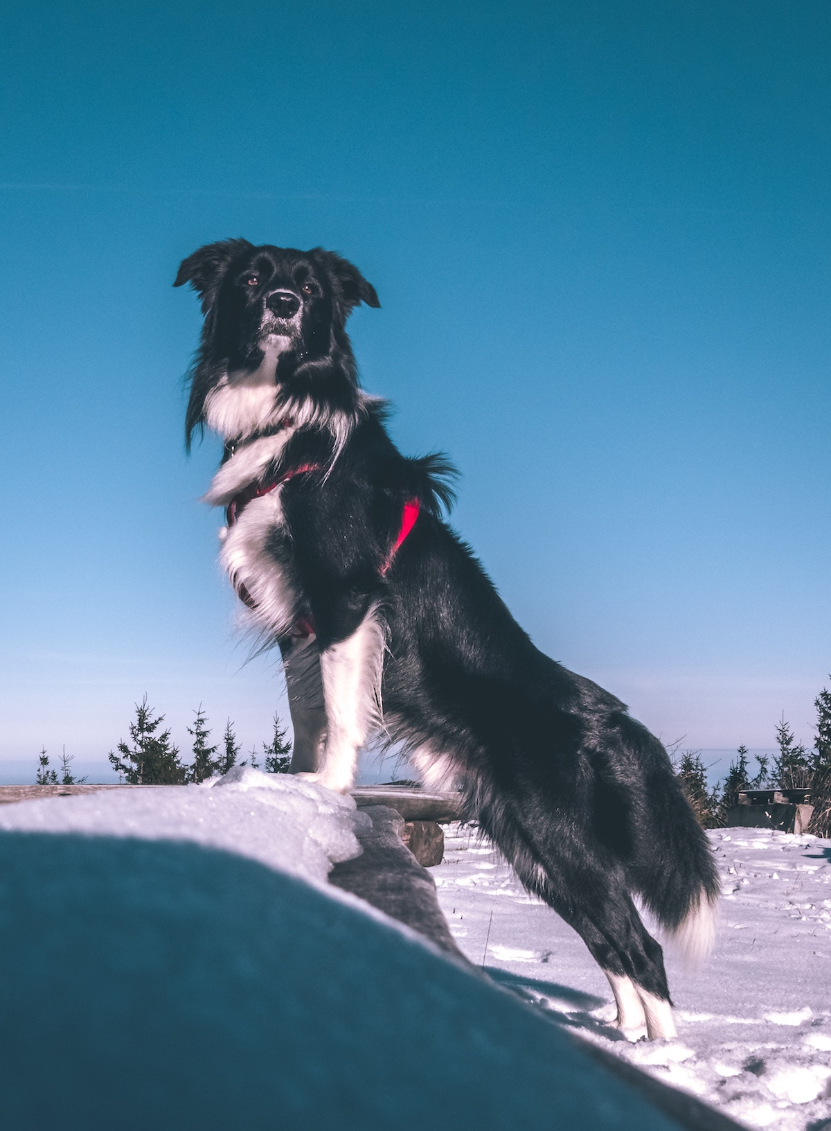 Protect your pet in freezing temperatures - Grove Vets Ballymena